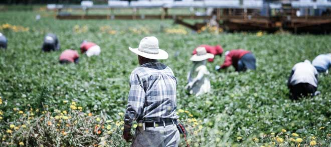 Do large farms really exploit their workers?
