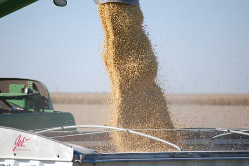 Are we setting up for a soybean shortage?